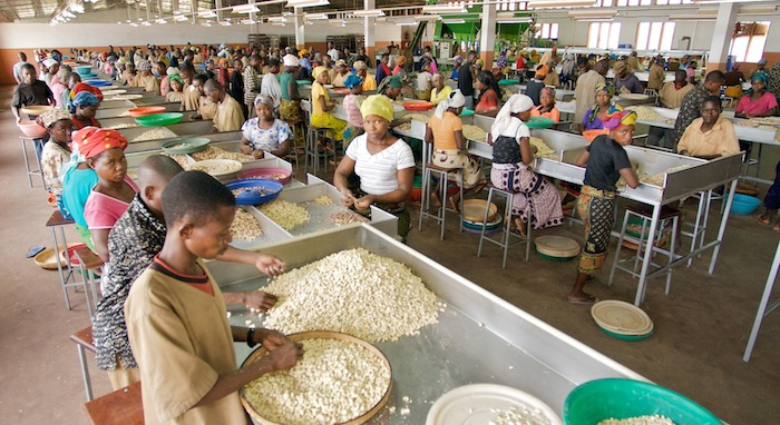 Cashew processing in Nampula, Mozambique