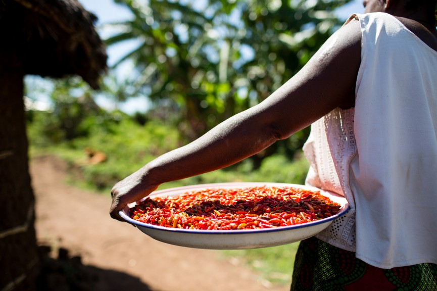 When For-Profit is the Right Answer for a Social Enterprise: Nuru International's transformation toward profitability, without losing its social values