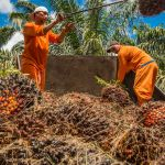 The Ecological Disaster of Palm Oil: Why It's Time to Embrace Climate-Friendly Alternatives
