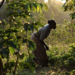 Climate-Positive Agriculture: How Investors Can Support Smallholder Farmers – While Also Regenerating the Environment