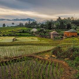 An emerging markets farm