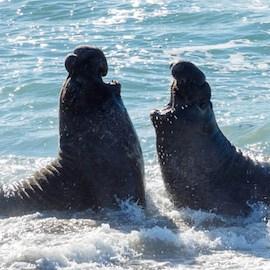 FinTech's Elephant Seal Problem