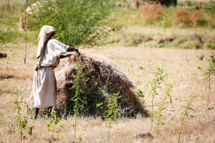 A New Era of Farming: Unlocking Innovations for Smallholders Via Non-Traditional Finance on NextBillion.net