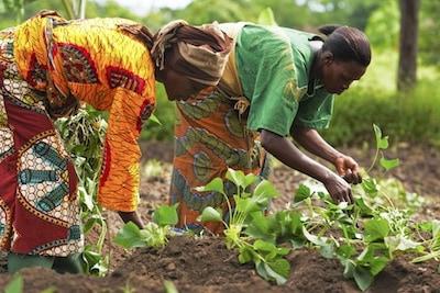 Social Lending for Smallholders: Opportunities to support social lenders in closing the smallholder agricultural finance gap
