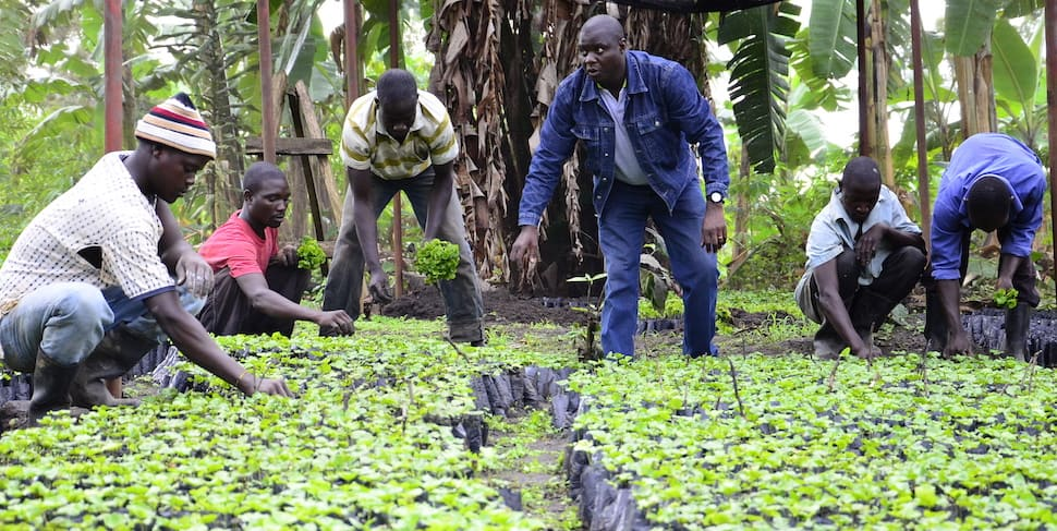 Image: Joseph Nkandu trains Ugandan coffee farmers