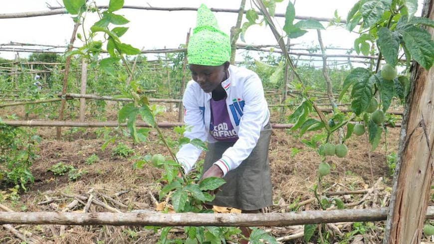 KadAfrica student pruning her passion fruit plants in Uganda