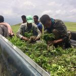 Cash, Trees, Honey and Bees: Enticing Ethiopia's Farmers Toward Eco-Stewardship