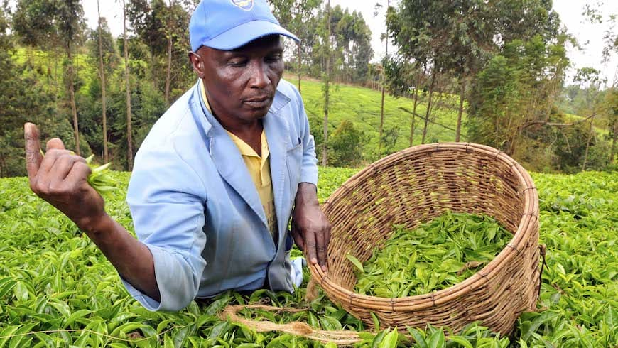 Financial Inclusion is Failing Farmers: How the Sector Can Finally Reach the $200 Billion Smallholder Market on NextBillion.net