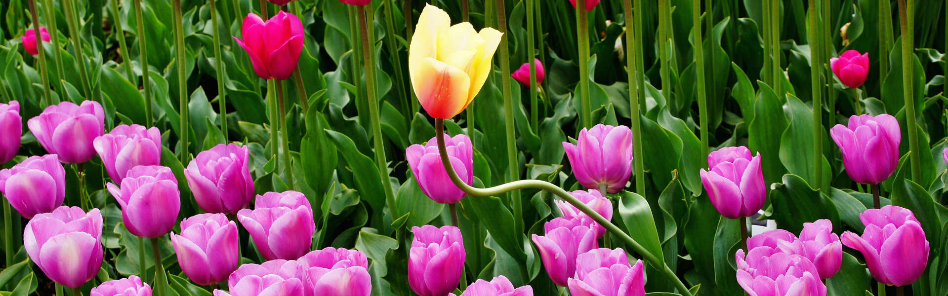 Standout flower picture